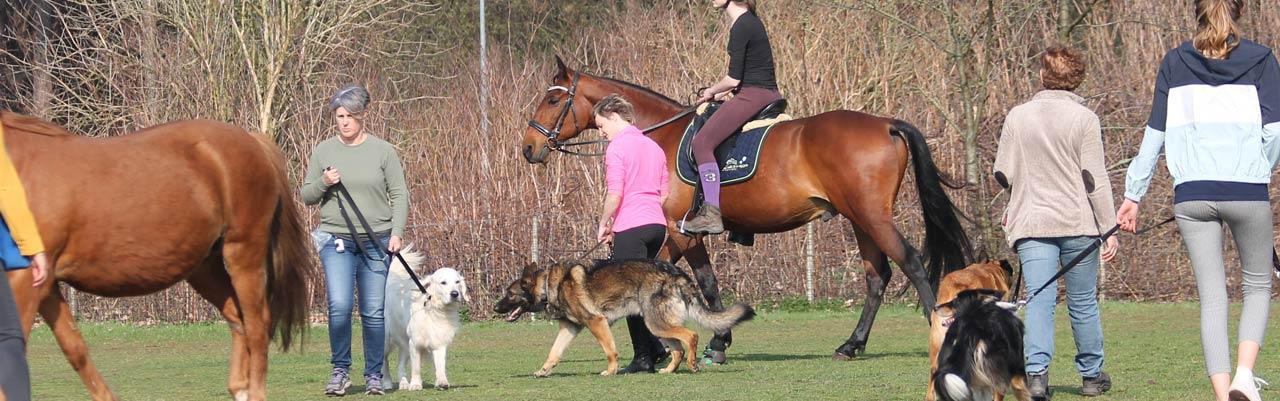 paard en hond